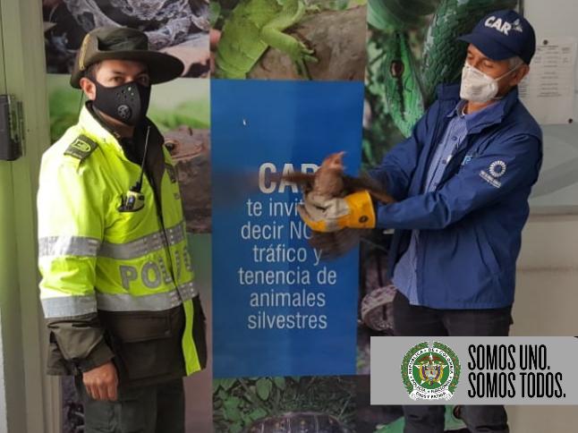 En el sector de Ciudad Verde del municipio de Soacha, la ciudadanía entrego a la Policía Ambiental una ave silvestre.