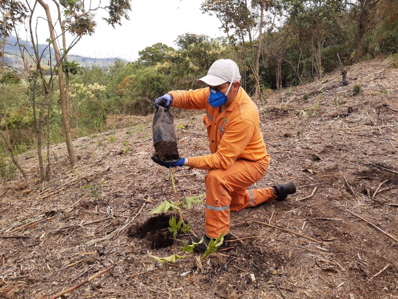 Minambiente sigue sumando aliados a la meta de sembrar 180 millones de árboles nativos