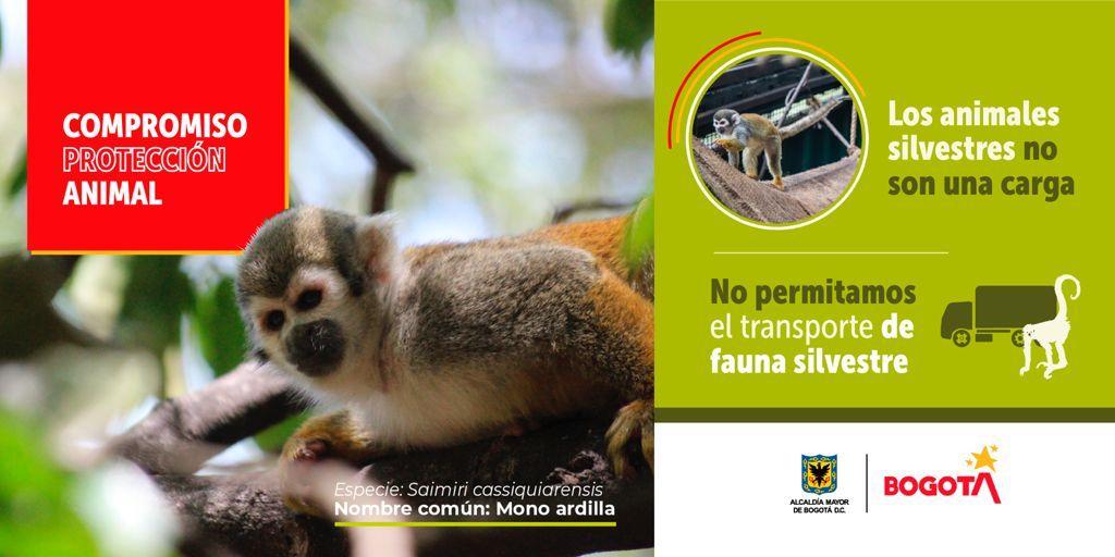 Distrito presenta campaña para la protección de la fauna silvestre y los animales de compañía